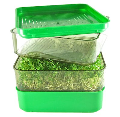 Bergs Bio Salad sprouter FRESH SPROUTS small
