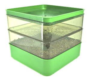 Bergs Bio Salad Sprouter with sprouting seeds