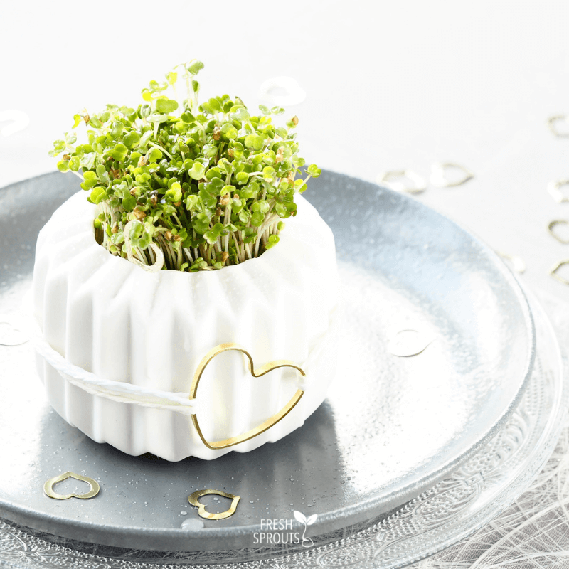 Sprouts in a small pot for your table decoration