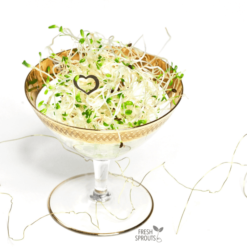 Table settings with sprouts in cocktail glass FRESH SPROUTS