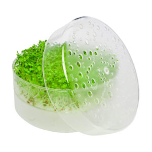 SproutPearl mit 1 Tablett mit frischen Sprossen