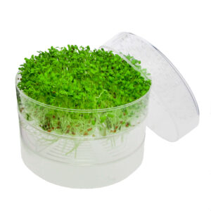 sproutpearl with 2 trays by fresh sprouts