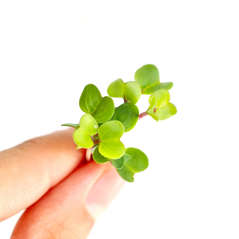 How to grow sprouts yourself