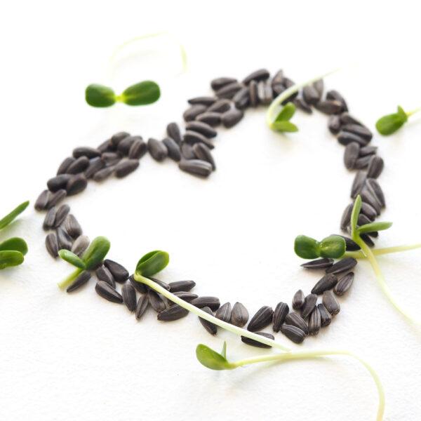 Certified sunflower seeds