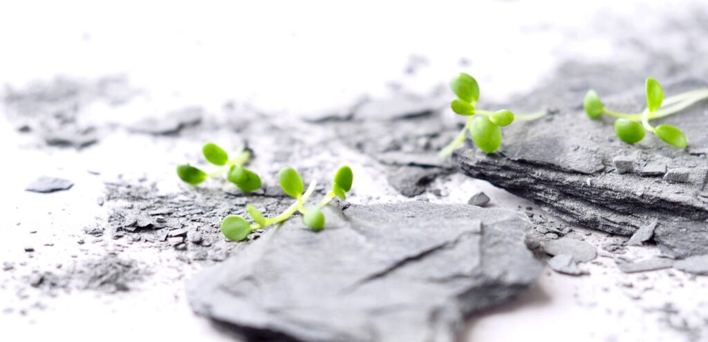 Durability in sprouts and microgreens