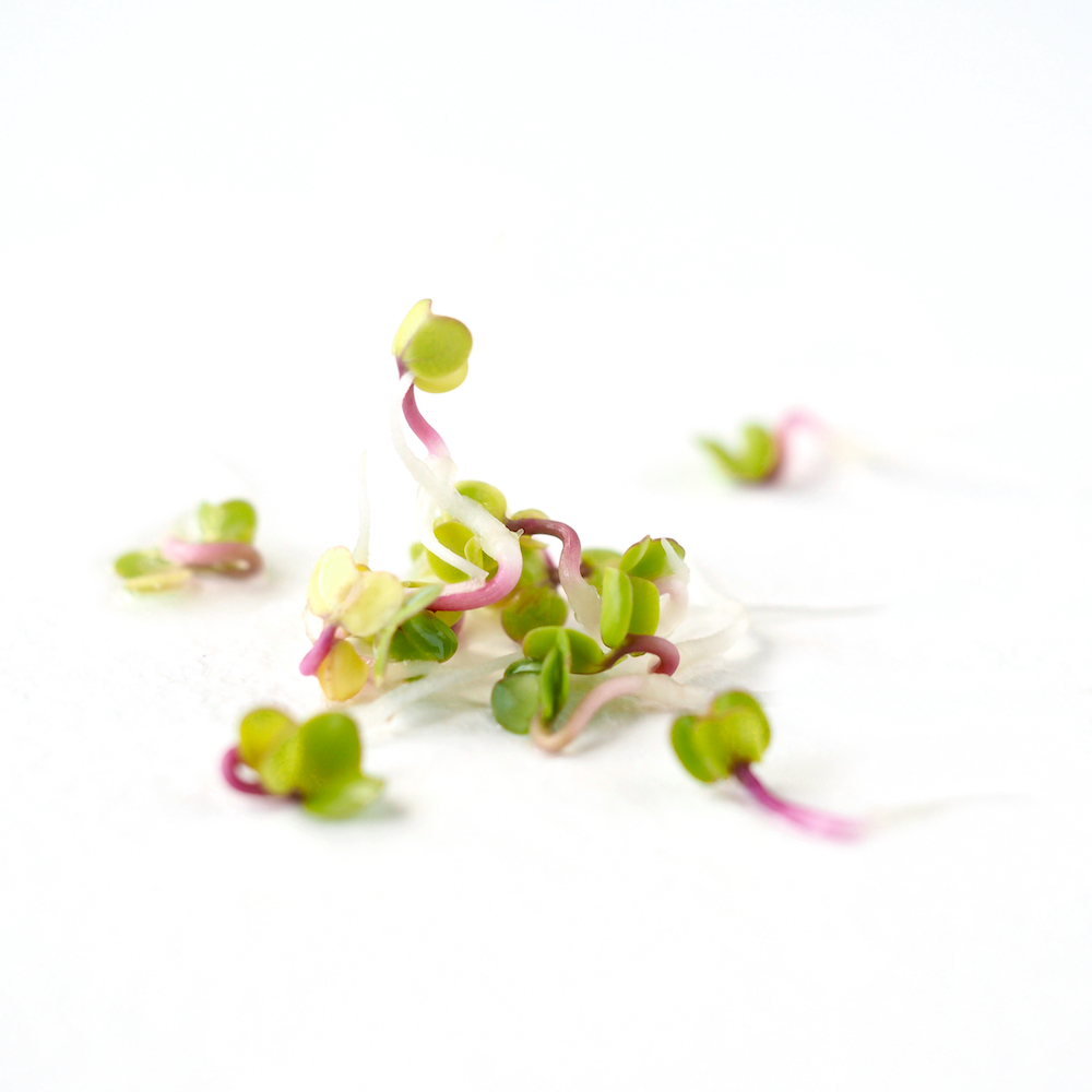 Placement of rose radish sprouts for color development
