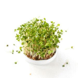 Rucola sprouts or salad rocket sprouts