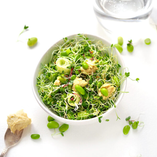 sprout salad with clover and radish sprouts