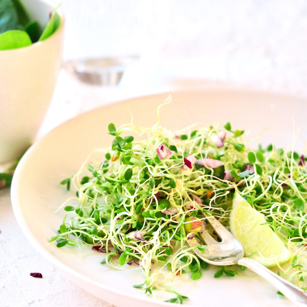 clover salad with sprouts
