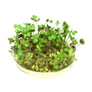 organic mustard sprouts