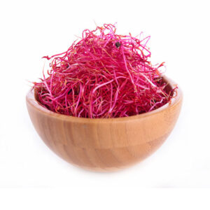red beet sprouts from organic sprouting seeds