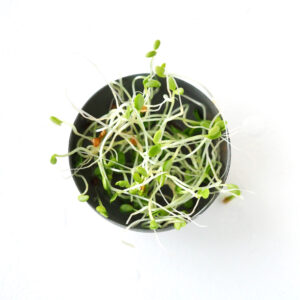 young organic endive sprouts