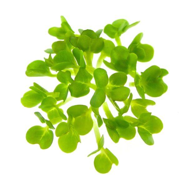 organic rape sprouts