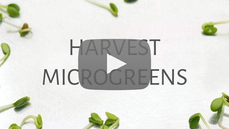 harvest microgreens video