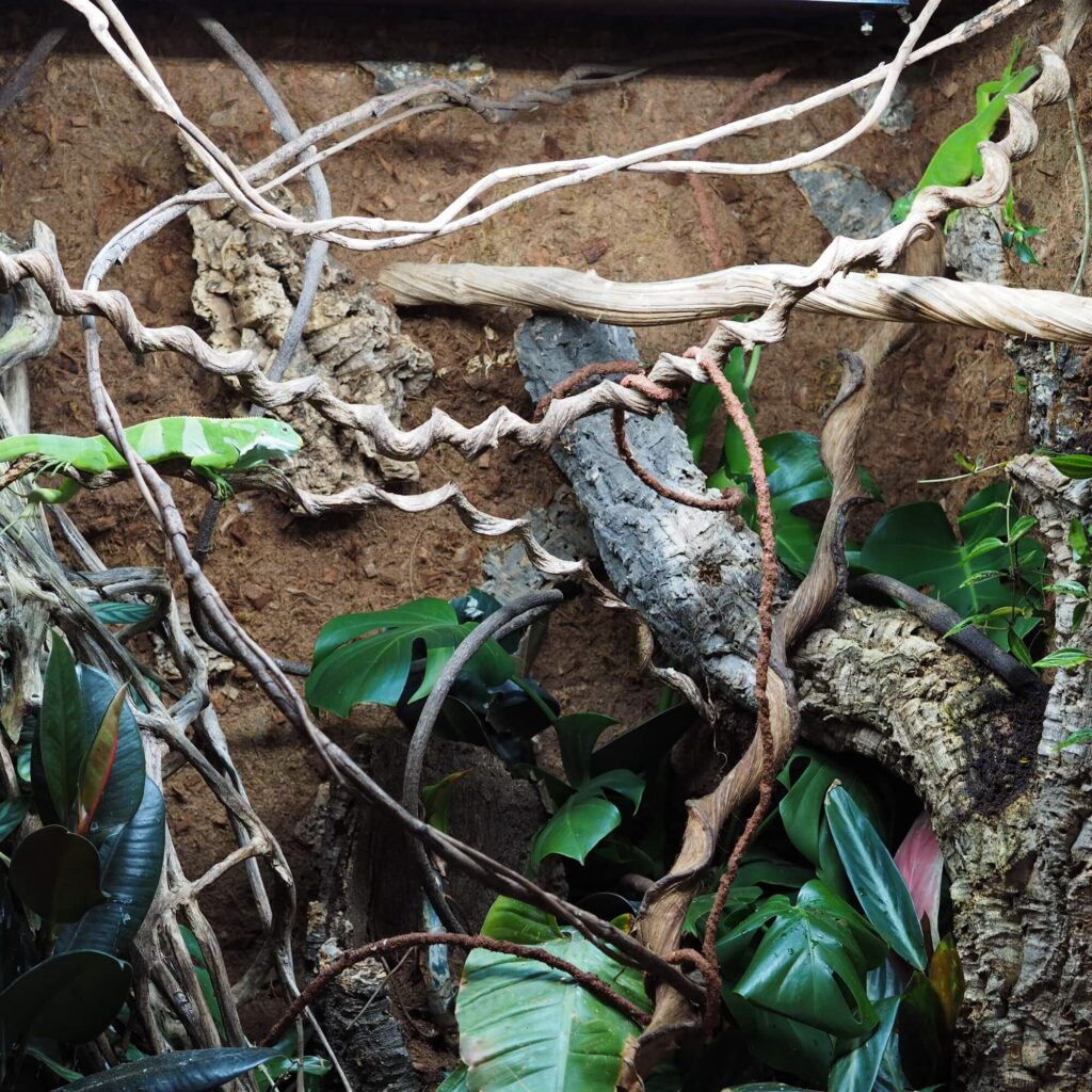 grow your own organic food for iguanas