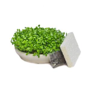 ceramic sprouting tray kit