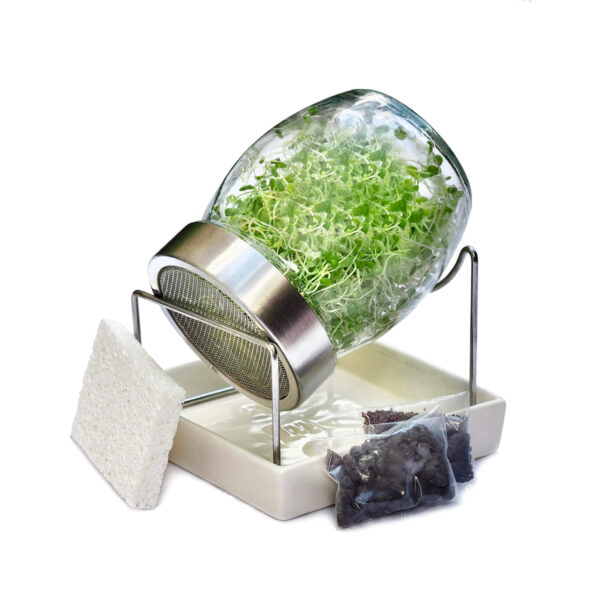 sprout jar kit for sprouting by fresh sprouts