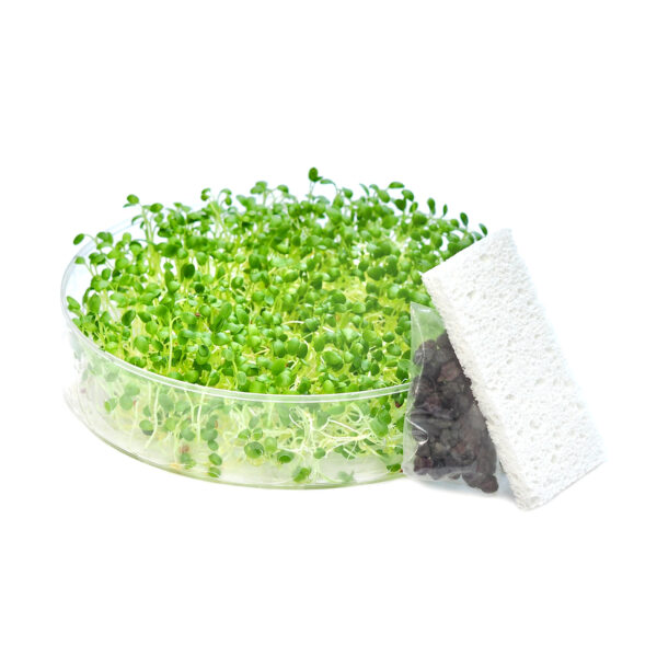 SproutPearl seed tray kit with seeds and sponge